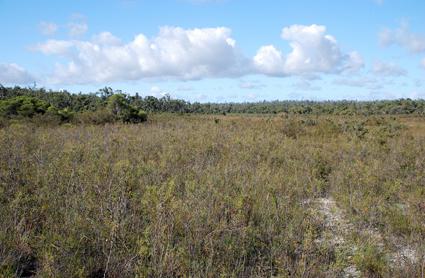 Habitat Clare State Forest (Australia)