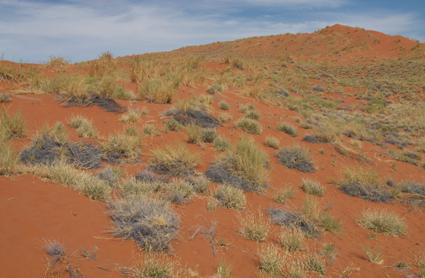 Habitat Elim Dune (Namibia)