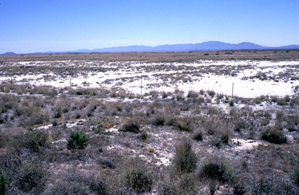 Habitat Willcox Playa (USA)