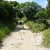 Habitat Kosi Bay (South Africa)