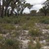 Habitat Wandoo National Park (Australia)