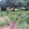 Habitat Ndumo Game Reserve (South Africa)