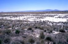 Habitat Willcox Playa (USA)
